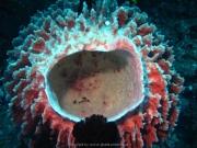 Bali-Dive-019
