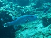 Bali-Dive-021