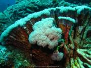 Bali-Dive-022