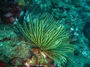 Bali-Dive-024