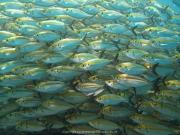 Bali-Dive-027