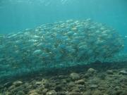 Bali-Dive-028