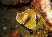 Bali-Dive-034