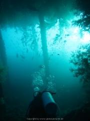 Bali-Dive-038