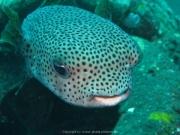 Bali-Dive-043