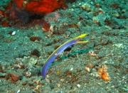 Bali-Dive-045