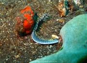 Bali-Dive-046