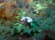 Bali-Dive-049