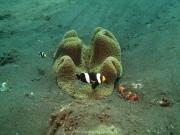 Bali-Dive-051