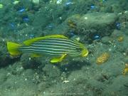 Bali-Dive-052