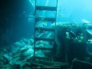 Bali-Dive-072