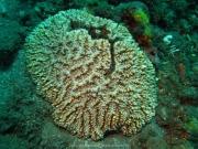 Bali-Dive-078