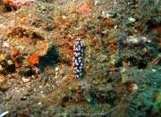Bali-Dive-080