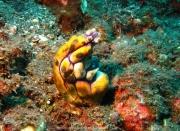 Bali-Dive-081