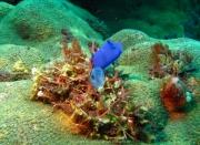Bali-Dive-082