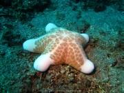 Bali-Dive-099