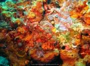 Bali-Dive-100