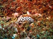 Bali-Dive-101
