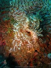 Bali-Dive-104