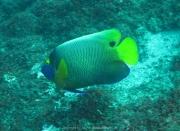 Bali-Dive-106