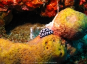 Bali-Dive-108