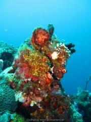 Bali-Dive-109