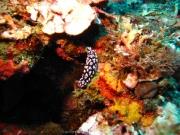Bali-Dive-110