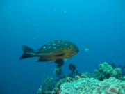 Bali-Dive-111