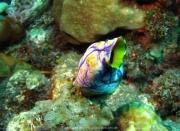 Bali-Dive-112