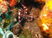 Bali-Dive-114