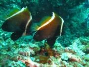 Bali-Dive-115