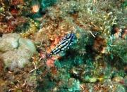 Bali-Dive-116