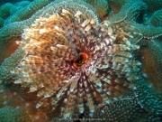 Bali-Dive-118
