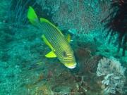 Bali-Dive-122