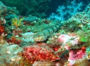 Bali-Dive-123