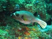 Bali-Dive-125