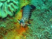 Bali-Dive-127