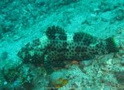 Bali-Dive-133