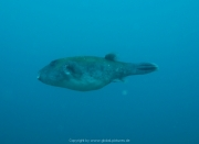 Bali-Dive-135