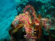 Bali-Dive-136
