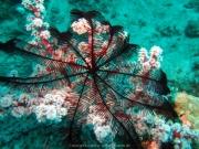 Bali-Dive-137