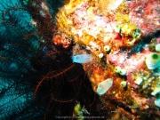 Bali-Dive-138