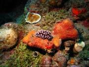 Bali-Dive-140