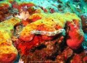 Bali-Dive-142