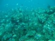 Bali-Dive-143