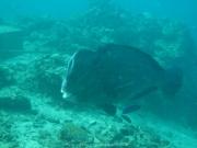 Bali-Dive-145
