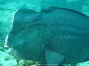 Bali-Dive-146