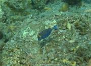 Bali-Dive-147