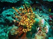 Bali-Dive-152