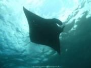 Bali-Dive-153